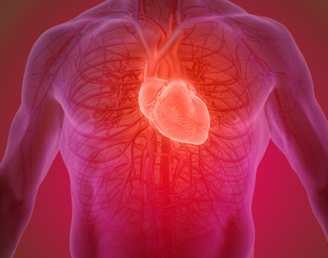 Cardiology-Heart-Circulatory-System